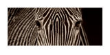 Zebra Grevy Reproduction d'art par Marina Cano