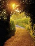 Sunlit Country Lane  Devon  England