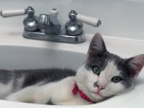 Cat Lying in a Sink
