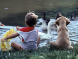 Little Boy and Puppy Looking at Ducks in Pond