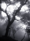 Mist Filled Forest
