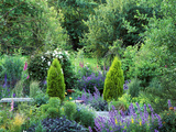 View into Country Garden with Perennials and Small Trees Summer