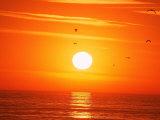 Birds Flying at Sunset  Playa Del Rey  CA
