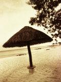 Palapa Umbrella on the Beach  Cancun  Mexico