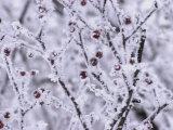 Winnipeg Manitoba  Canada Winter Scenes