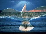 Bird Superimposed Over Ocean