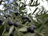 Close-up of Tree in Umbria