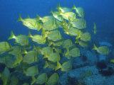 School of Tropical Fish Underwater