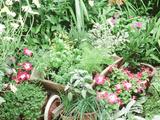 Parsley  Sage  Basil  Dill  Fennel  Tarragon  Rosemary  Chives  Thyme Oregano  Bay  Petunia