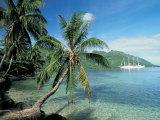Moorea  Society Islands  French Polynesia