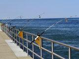 Fishing Poles Along St Clair River  Port Huron  MI