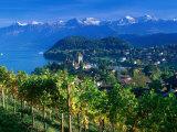 Castle and Vines  Spiez  Switzerland