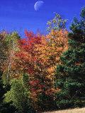 Autumn Trees with Moon  Vermont