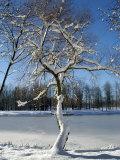 Winter Scenic  Michigan