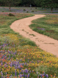 Dirt Road with Wildflowers  Texas