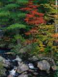 Fall Scenic  Acadia National Park  Maine