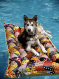 Dog Floating on Raft in Swimming Pool