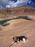 Beagle Dog at Lake Powell  UT