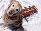 Dog and Old Sled  Breckenridge  CO