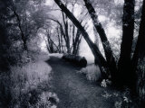 Path Through the Woods  Infrared Photograph