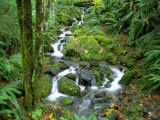 Waterfall at Mt Rainer Rain Forest