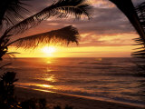 Sunset on the Ocean with Palm Trees  Oahu  HI