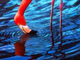 Flamingo  Florida