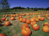 Pumpkin Patch  CA