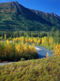 Mts and Trees in Autumn  Denali National Park  AK
