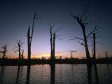 Sunrise at the Alligator Bayou Swamp  Louisiana