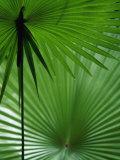 Tropical Grasses  Nadi  Viti Levu