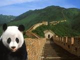 Panda and Great Wall of China