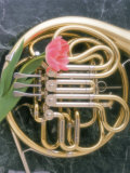 French Horn with a Tulip