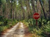 Central Florida  Stop Sign  Ocala Forest Road