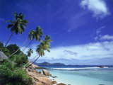 Palm Trees and Ocean  La Digue  Seychelles