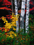 Fall Color, Old Forge Area, Adirondack Mountains, NY Papier Photo par Jim Schwabel