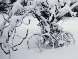 Snow Covers Two Bicycles Chained to a Tree