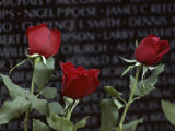 Roses Glow against the Black Granite of the Vietnam Veterans Memorial