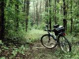 A Bike Rests on a Woodland Trail
