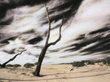 Encroaching Sand Dunes Bury Dead Tree Trunks