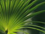 Close View of a Palm Frond Papier Photo par Klaus Nigge
