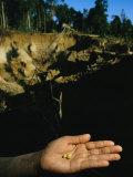 Deux petites pépites d'or dans une main avec le trou de la mine en toile de fond Papier Photo par Steve Winter
