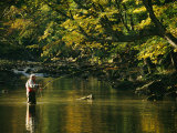 Fly Fisherman Casts his Line into the Elk River