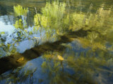 Trees Reflected in the Water