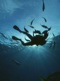 Fish Swim Around a Diver