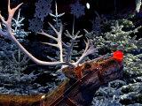 Rudolph with Your Nose So Bright  at Tivoli Gardens  Denmark