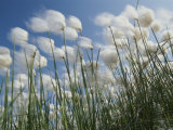 Plant Pods Blowing in the Wind  Yukon Territory