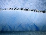Chinstrap Penguins Lined up Along a Blue Iceberg
