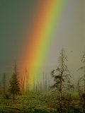 A Brilliantly Colored Rainbow Ends in a Barren Forest in the Madison River Valley