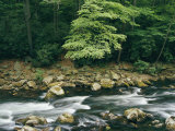 The Savage River Flows Swiftly over Rocks in a Wooded Area